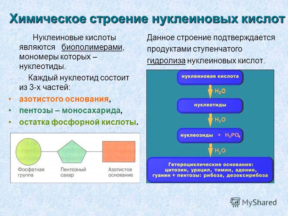 Доклад по биологии на тему нуклеиновые кислоты 5550