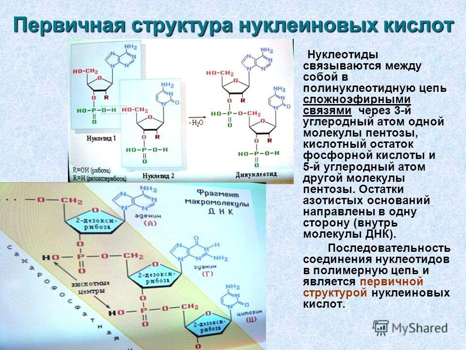 Нуклеиновая кислота болезни медицина полевая медицина партизан