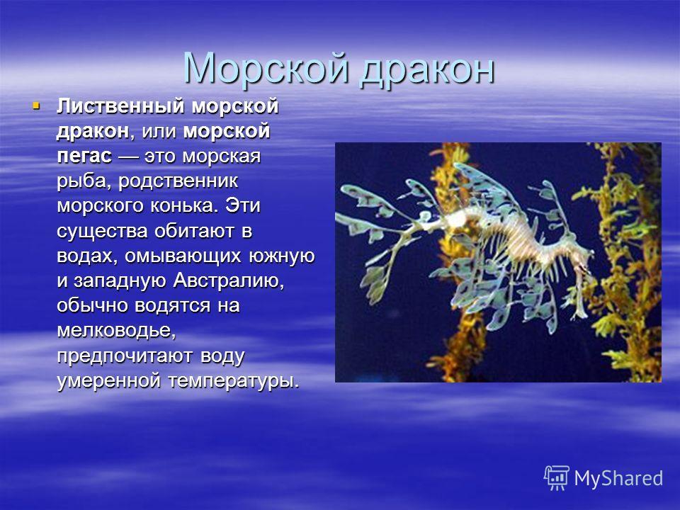 Морской дракон Лиственный морской дракон, или морской пегас это морская рыба, родственник морского конька. Эти существа обитают в водах, омывающих южную и западную Австралию, обычно водятся на мелководье, предпочитают воду умеренной температуры. Лист