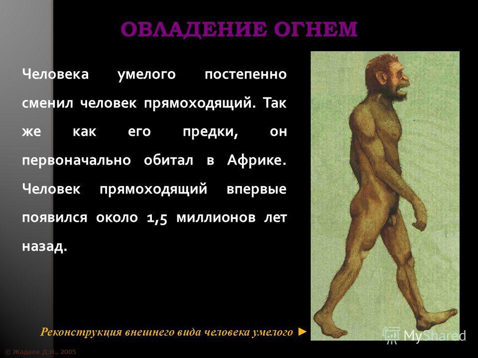 © Жадаев Д.Н., 2005 ОВЛАДЕНИЕ ОГНЕМ Человека умелого постепенно сменил человек прямоходящий. Так же как его предки, он первоначально обитал в Африке. Человек прямоходящий впервые появился около 1,5 миллионов лет назад. Реконструкция внешнего вида чел