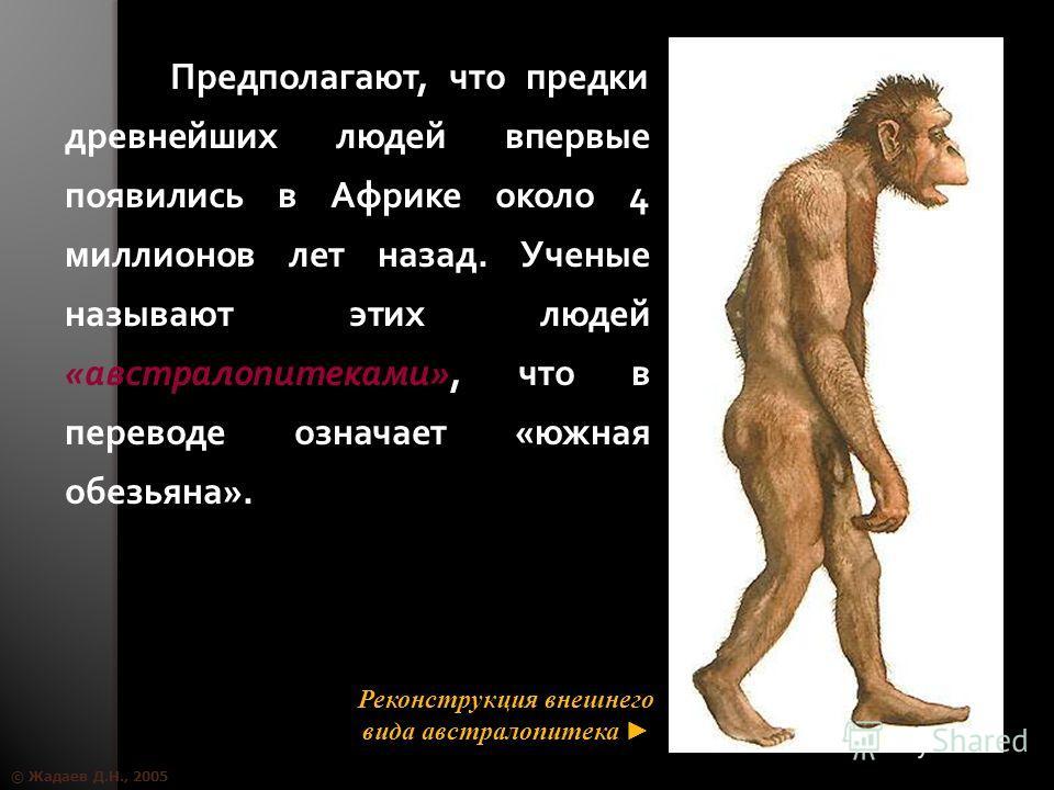© Жадаев Д.Н., 2005 Предполагают, что предки древнейших людей впервые появились в Африке около 4 миллионов лет назад. Ученые называют этих людей «австралопитеками», что в переводе означает «южная обезьяна». Реконструкция внешнего вида австралопитека