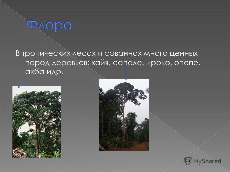 В тропических лесах и саваннах много ценных пород деревьев: хайя, сапеле, ироко, опепе, акба идр.