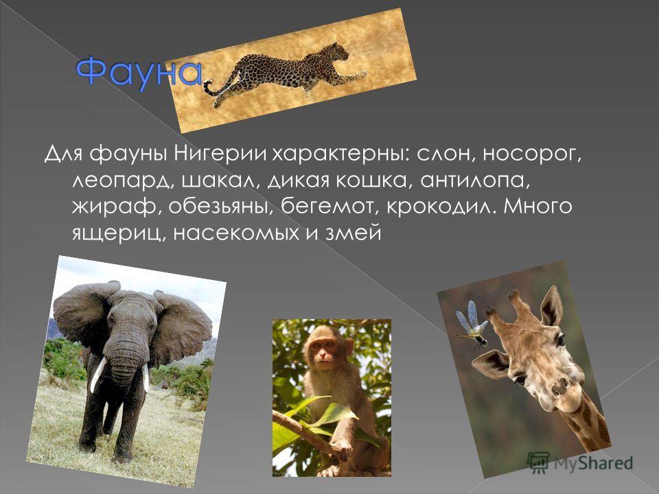 Для фауны Нигерии характерны: слон, носорог, леопард, шакал, дикая кошка, антилопа, жираф, обезьяны, бегемот, крокодил. Много ящериц, насекомых и змей