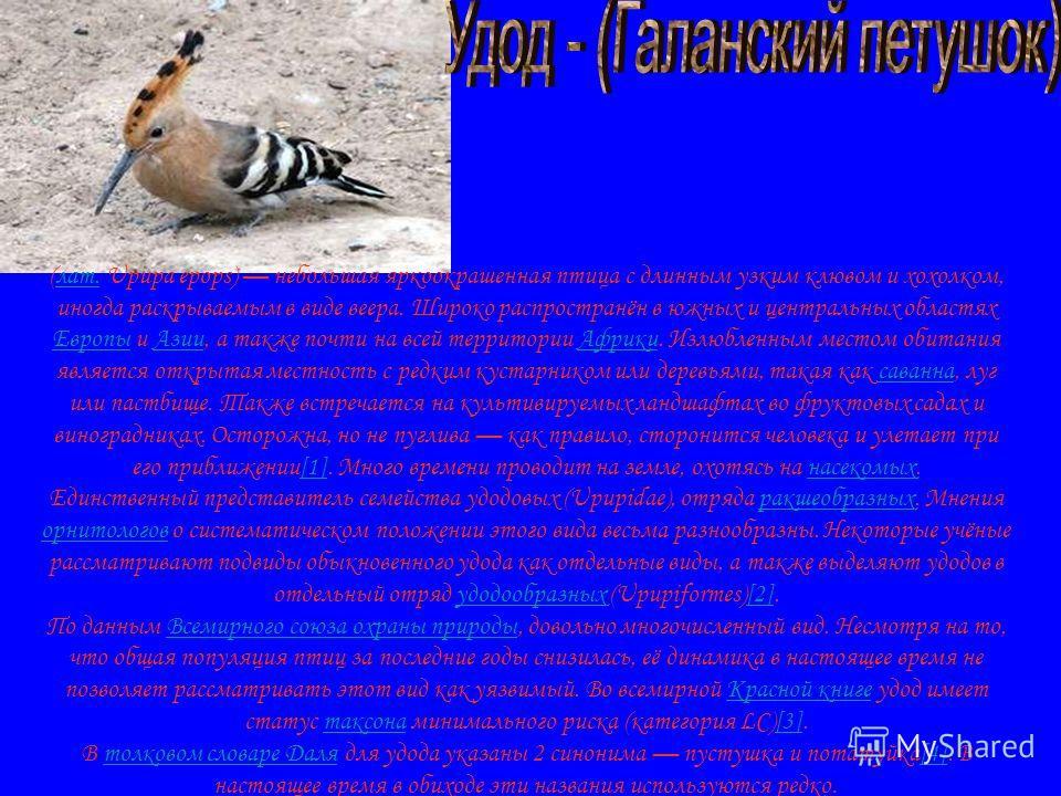 (лат. Upupa epops) небольшая яркоокрашенная птица с длинным узким клювом и хохолком, иногда раскрываемым в виде веера. Широко распространён в южных и центральных областях Европы и Азии, а также почти на всей территории Африки. Излюбленным местом обит