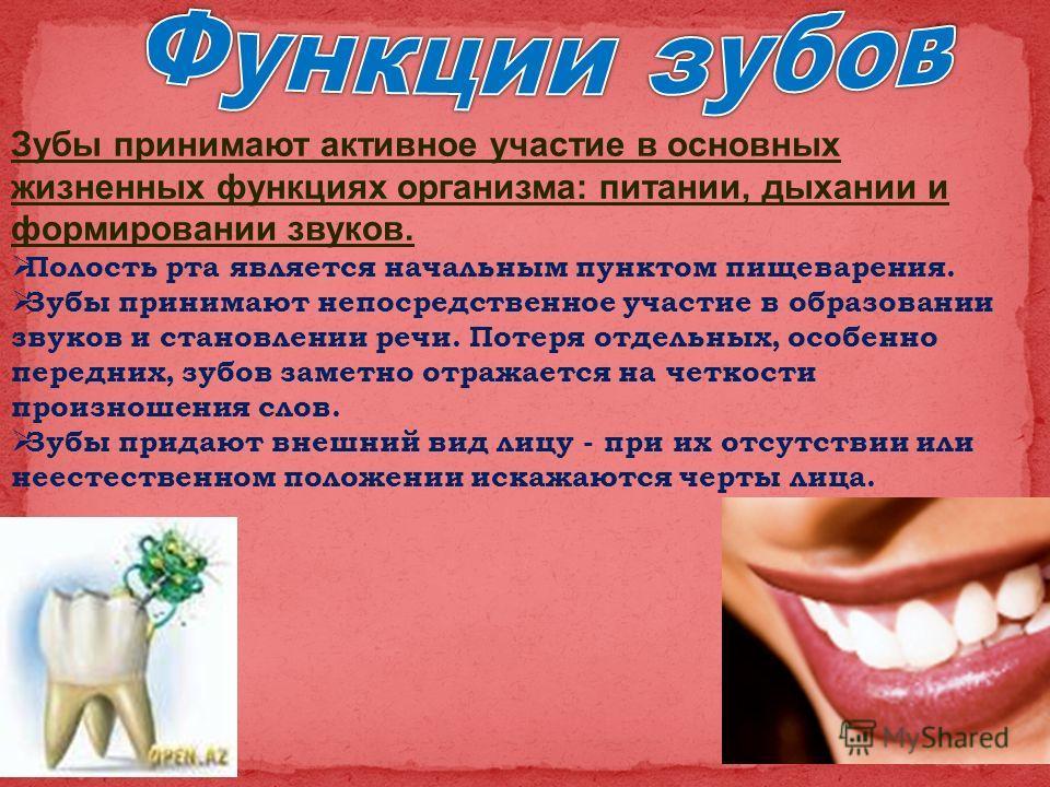 Зубы принимают активное участие в основных жизненных функциях организма: питании, дыхании и формировании звуков. Полость рта является начальным пунктом пищеварения. Зубы принимают непосредственное участие в образовании звуков и становлении речи. Поте