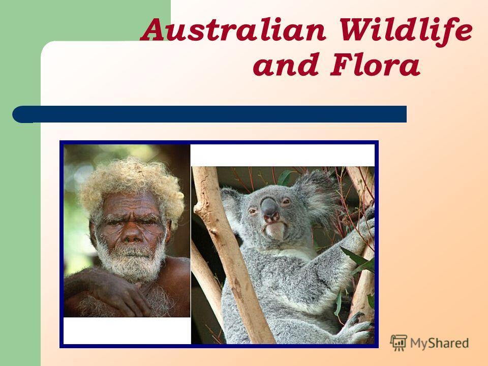 Australian Wildlife and Flora