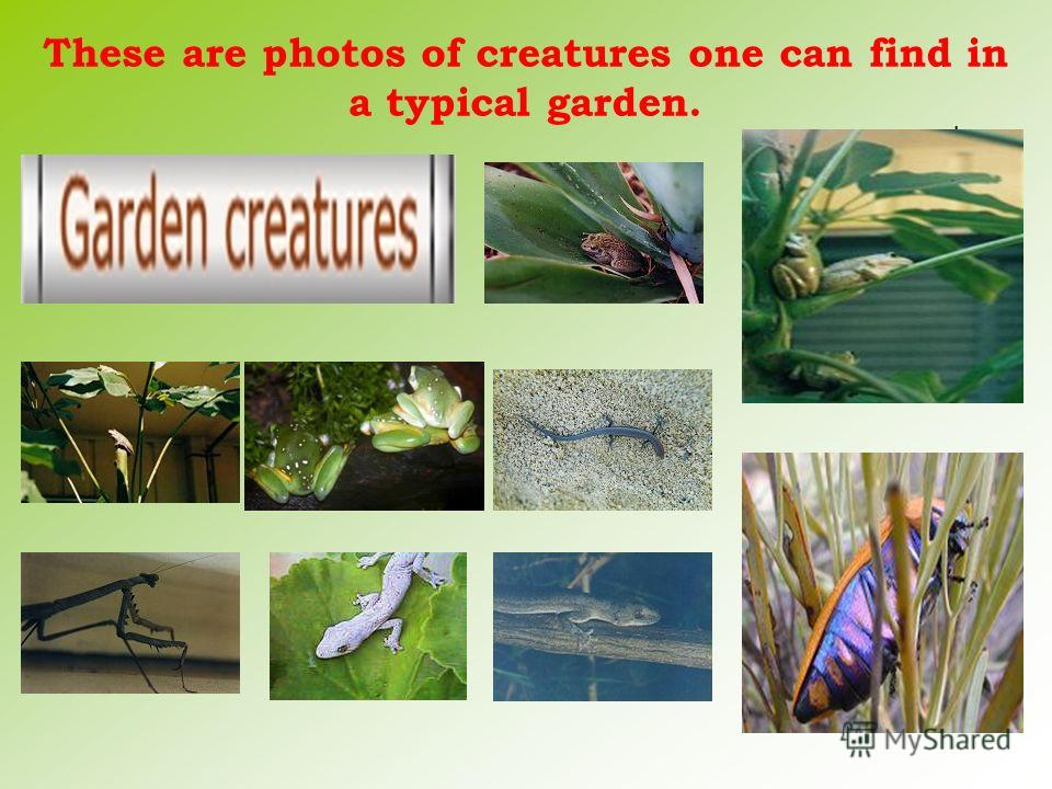 These are photos of creatures one can find in a typical garden. l