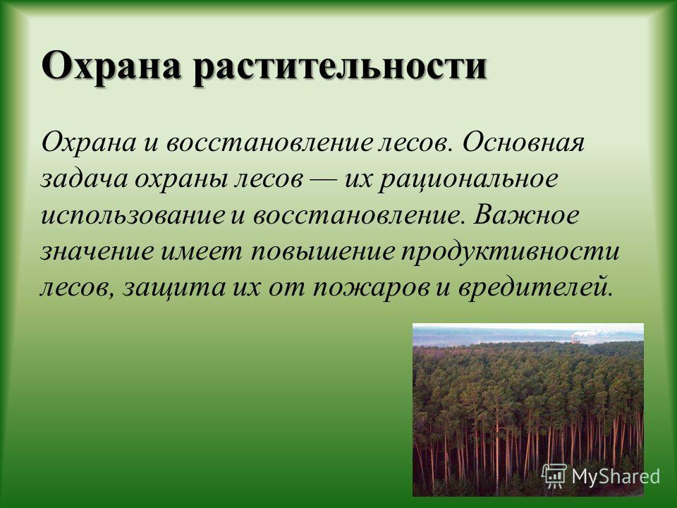 Охрана растительности Охрана и восстановление лесов. Основная задача охраны лесов их рациональное использование и восстановление. Важное значение имеет повышение продуктивности лесов, защита их от пожаров и вредителей.