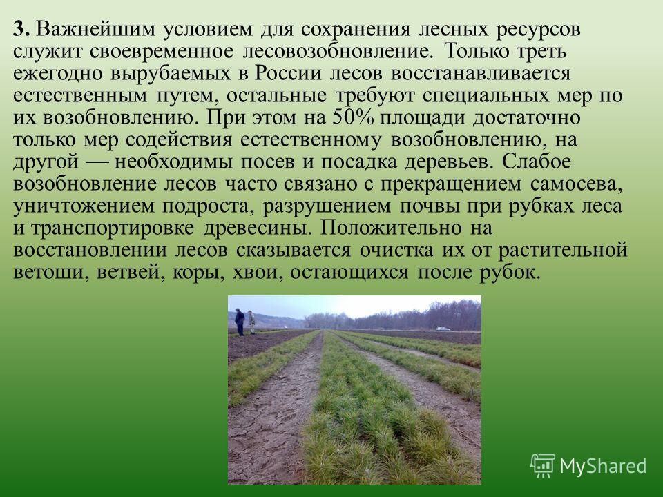 3. Важнейшим условием для сохранения лесных ресурсов служит своевременное лесовозобновление. Только треть ежегодно вырубаемых в России лесов восстанавливается естественным путем, остальные требуют специальных мер по их возобновлению. При этом на 50%