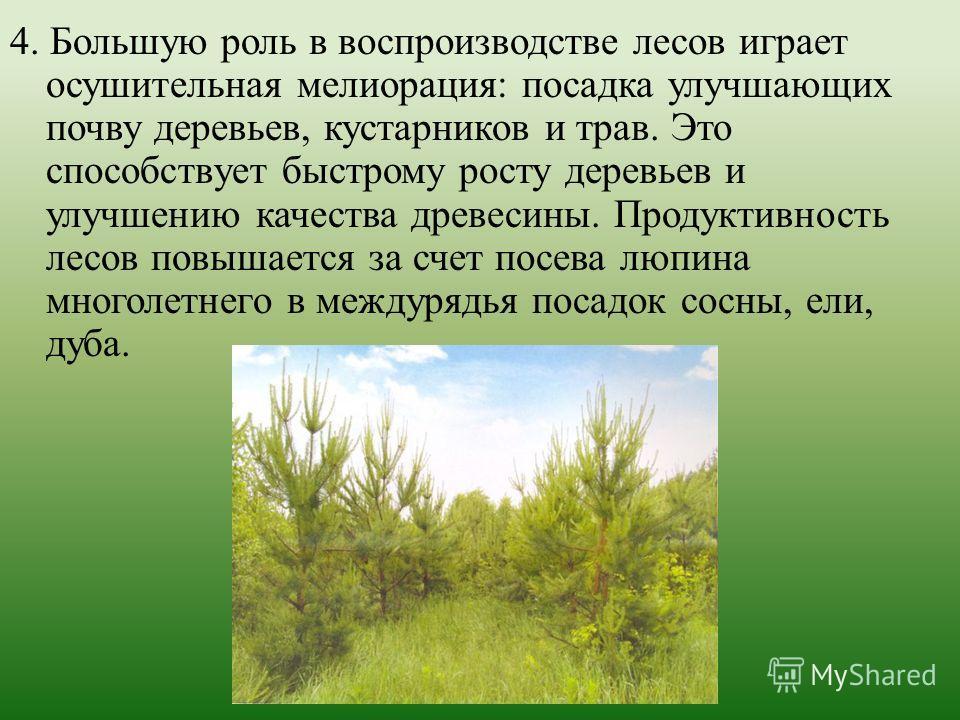 4. Большую роль в воспроизводстве лесов играет осушительная мелиорация: посадка улучшающих почву деревьев, кустарников и трав. Это способствует быстрому росту деревьев и улучшению качества древесины. Продуктивность лесов повышается за счет посева люп