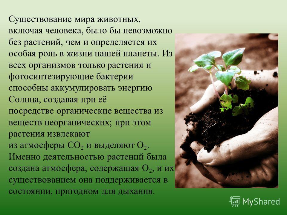 Существование мира животных, включая человека, было бы невозможно без растений, чем и определяется их особая роль в жизни нашей планеты. Из всех организмов только растения и фотосинтезирующие бактерии способны аккумулировать энергию Солнца, создавая