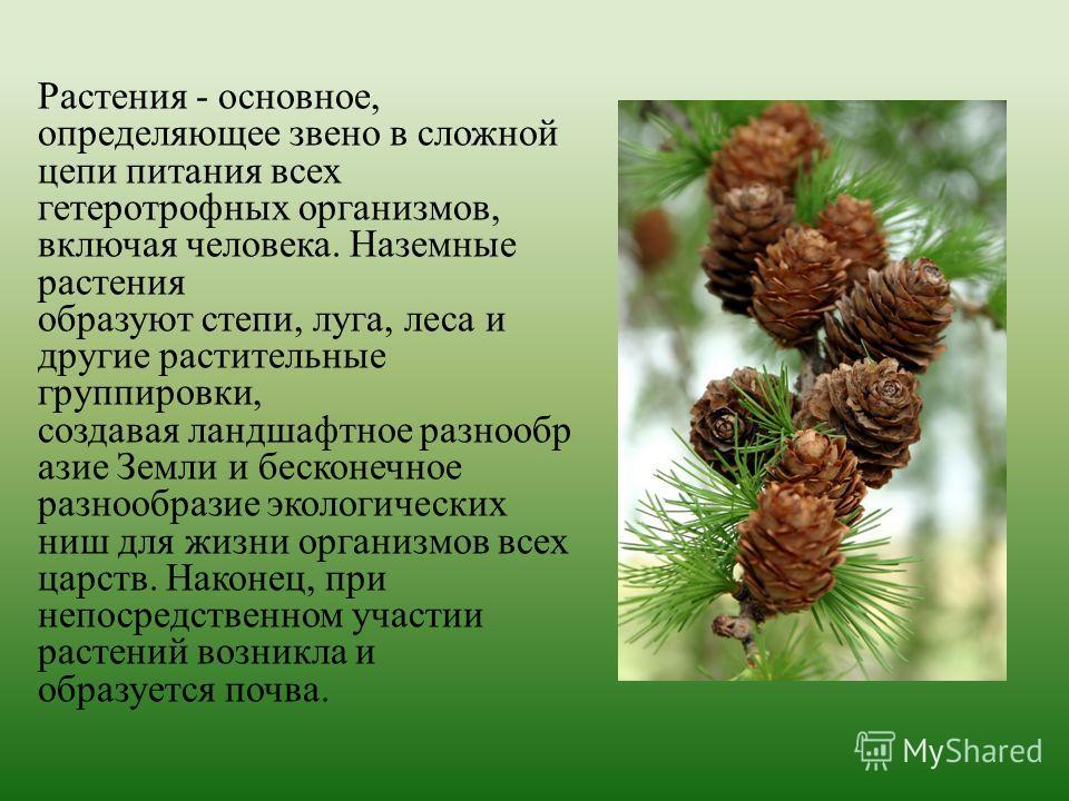 Растения - основное, определяющее звено в сложной цепи питания всех гетеротрофных организмов, включая человека. Наземные растения образуют степи, луга, леса и другие растительные группировки, создавая ландшафтное разнообр азие Земли и бесконечное раз