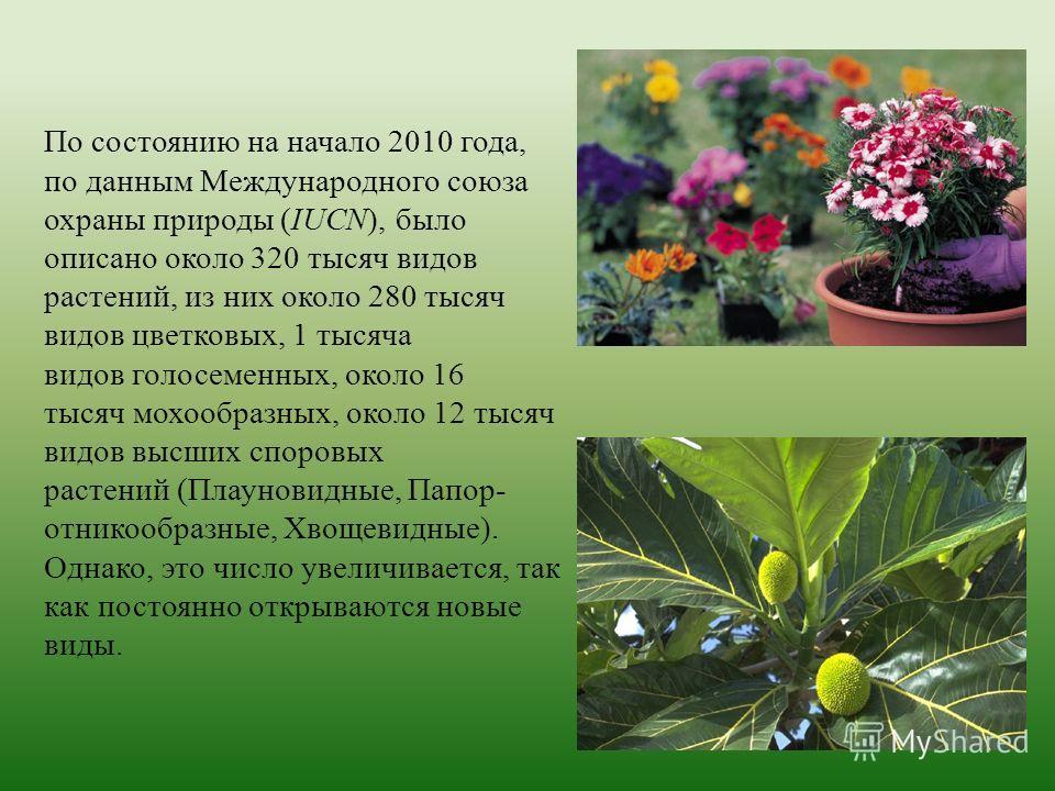 По состоянию на начало 2010 года, по данным Международного союза охраны природы (IUCN), было описано около 320 тысяч видов растений, из них около 280 тысяч видов цветковых, 1 тысяча видов голосеменных, около 16 тысяч мохообразных, около 12 тысяч видо