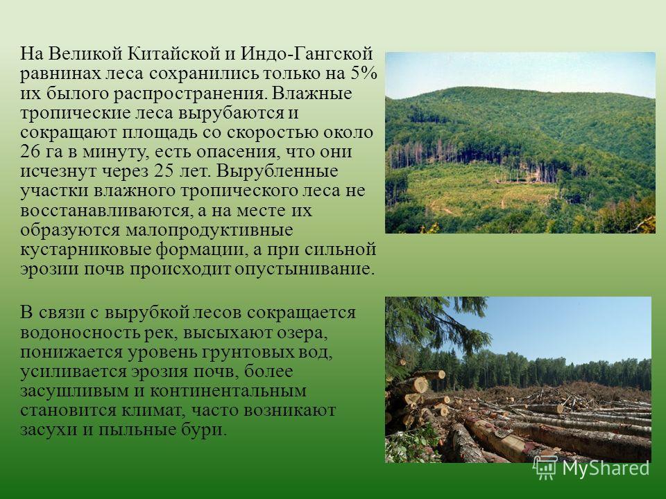 На Великой Китайской и Индо-Гангской равнинах леса сохранились только на 5% их былого распространения. Влажные тропические леса вырубаются и сокращают площадь со скоростью около 26 га в минуту, есть опасения, что они исчезнут через 25 лет. Вырубленны