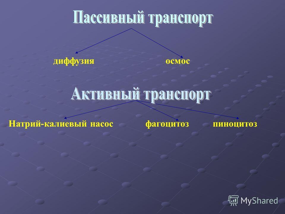 диффузияосмос Натрий-калиевый насосфагоцитозпиноцитоз