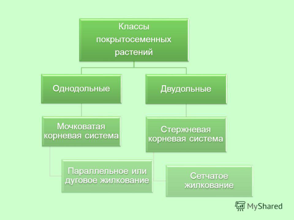 """Презентация на тему: """"Давайте вспомним из каких частей ...: http://www.myshared.ru/slide/445249/"""