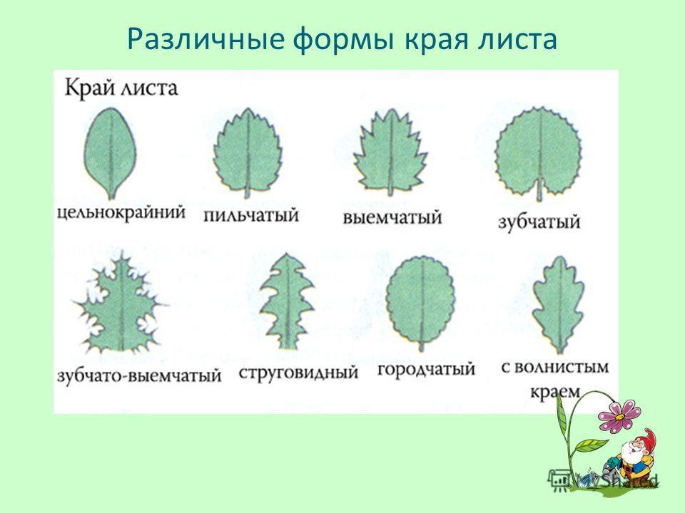 Различные формы края листа