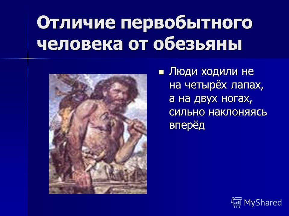 Отличие первобытного человека от обезьяны Люди ходили не на четырёх лапах, а на двух ногах, сильно наклоняясь вперёд Люди ходили не на четырёх лапах, а на двух ногах, сильно наклоняясь вперёд