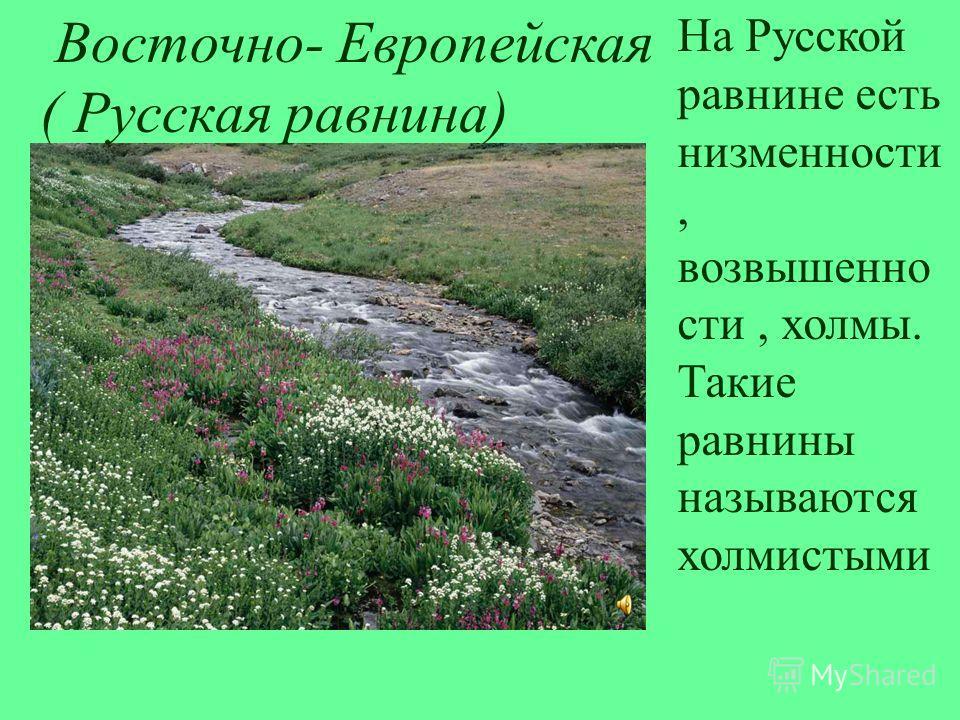 Восточно- Европейская ( Русская равнина) На Русской равнине есть низменности, возвышенно сти, холмы. Такие равнины называются холмистыми