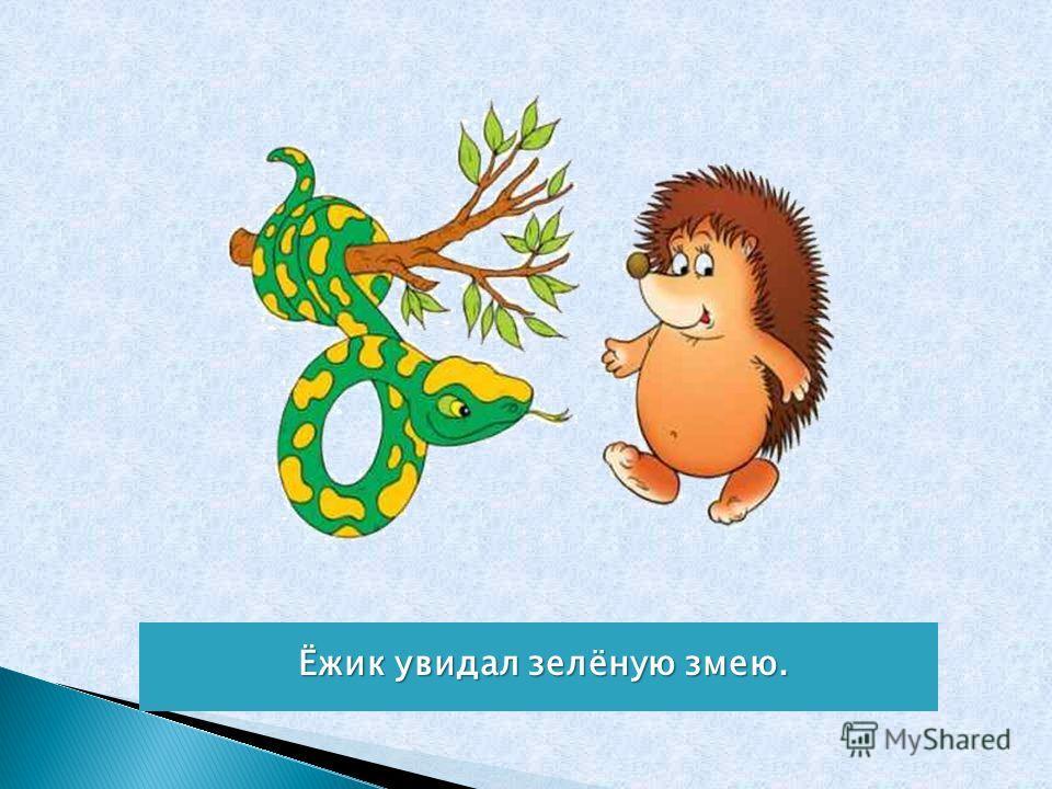 Ёжик увидал зелёную змею.