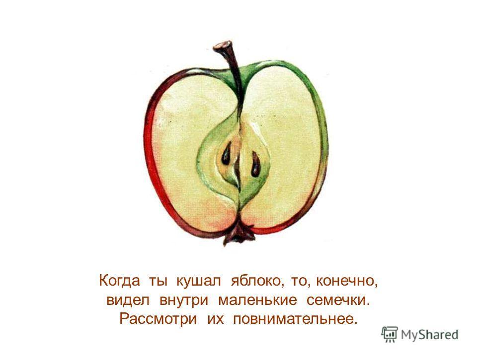 Когда ты кушал яблоко, то, конечно, видел внутри маленькие семечки. Рассмотри их повнимательнее.
