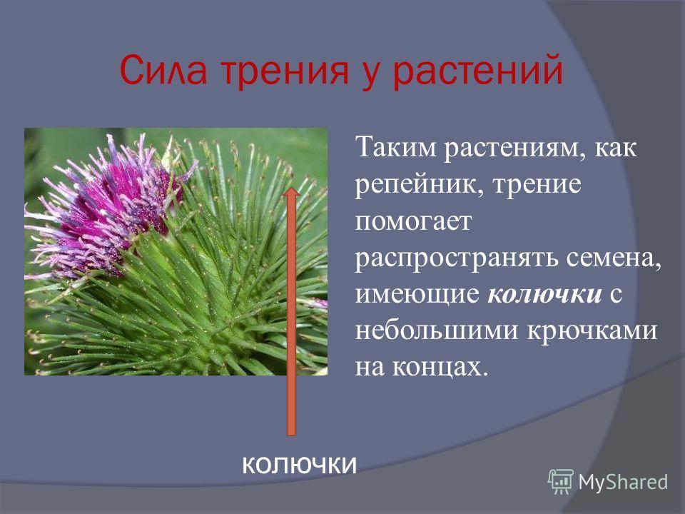 Сила трения у растений Таким растениям, как репейник, трение помогает распространять семена, имеющие колючки с небольшими крючками на концах. колючки