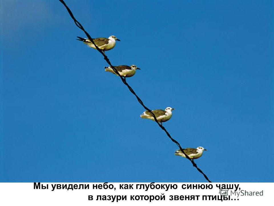 Мы увидели небо, как глубокую синюю чашу, в лазури которой звенят птицы…