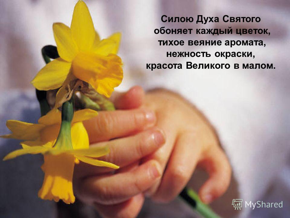 Силою Духа Святого обоняет каждый цветок, тихое веяние аромата, нежность окраски, красота Великого в малом.