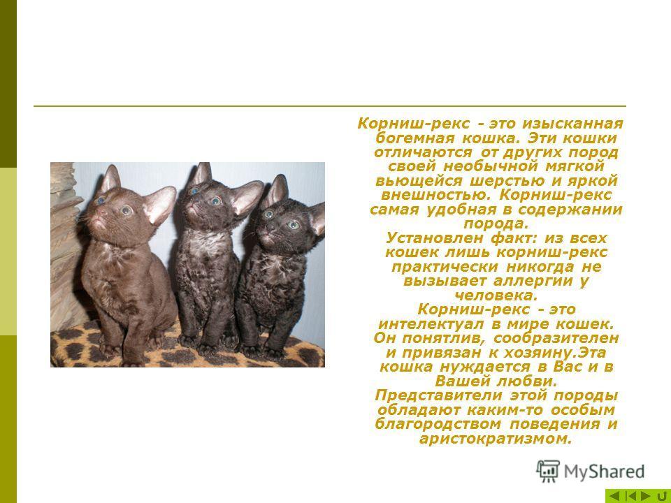 Вкус Органы вкуса различают кислые, соленые, сладкие и. горькие вещества. Кошки хорошо распознают горькие и соленые вещества и, хуже, сладкие. Это, но всей видимости, связано с тем, что живая добыча диких предков домашней кошки имела горьковатый и со