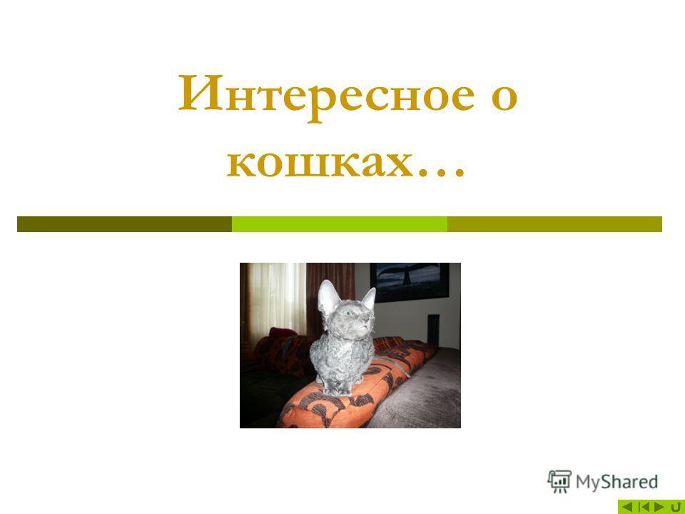 Содержание 1. Интересное о кошках Интересное о кошках 2. История История 3. Зрение Зрение 4. Обоняние Обоняние 5. Осязание Осязание 6. Слух Слух 7. Вкус Вкус 8. И животным нужны витамины И животным нужны витамины 9. Внешность Внешность 10. История по