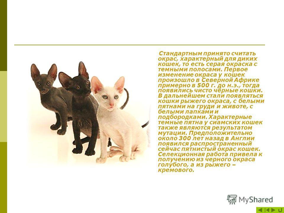 История Кошки в современном мире – одни из самых любимых или даже обожаемых домашних животных. Они стали спутниками человека ещё 6 тысяч лет назад. Их одомашнивание произошло в древнем Египте около 4 тыс. лет до н.э., где кошки являлись просто божест