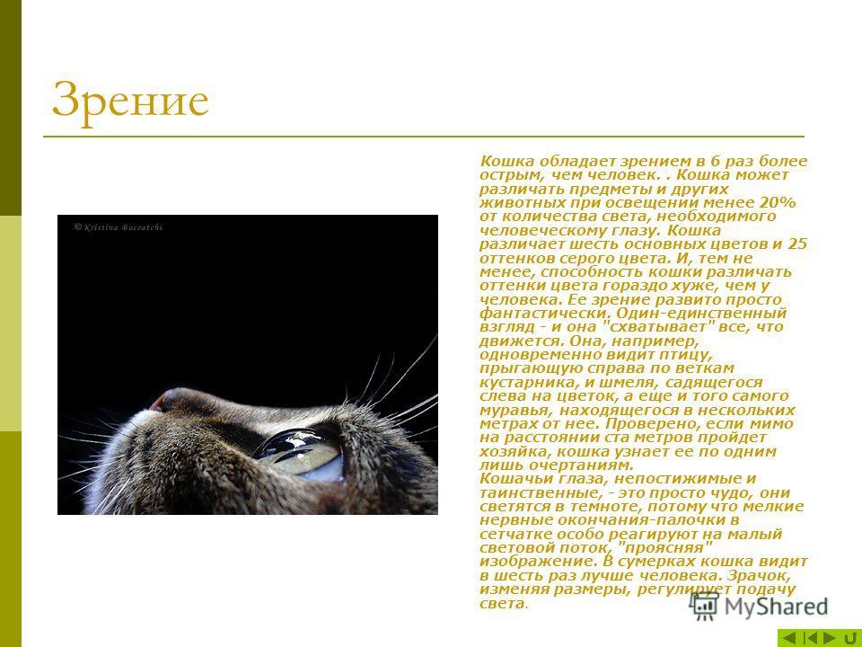 Стандартным принято считать окрас, характерный для диких кошек, то есть серая окраска с темными полосами. Первое изменение окраса у кошек произошло в Северной Африке примерно в 500 г. до н.э., тогда появились чисто чёрные кошки. В дальнейшем стали по