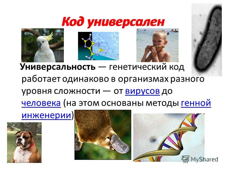 Код универсален Универсальность генетический код работает одинаково в организмах разного уровня сложности от вирусов до человека (на этом основаны методы генной инженерии)вирусов человекагенной инженерии Код универсален
