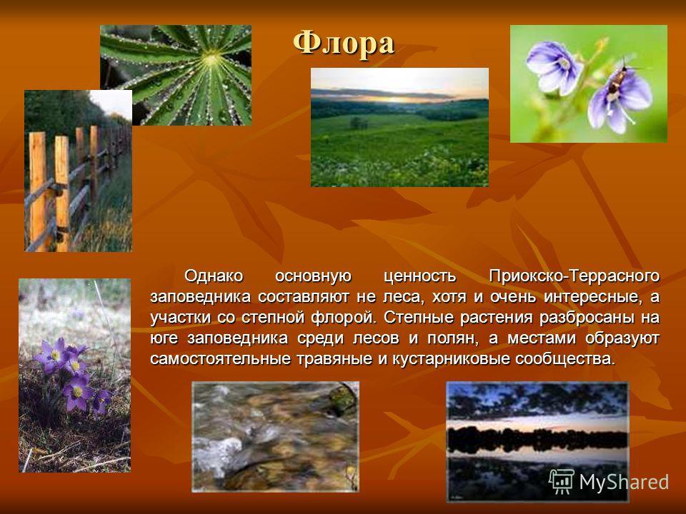 Флора Однако основную ценность Приокско-Террасного заповедника составляют не леса, хотя и очень интересные, а участки со степной флорой. Степные растения разбросаны на юге заповедника среди лесов и полян, а местами образуют самостоятельные травяные и