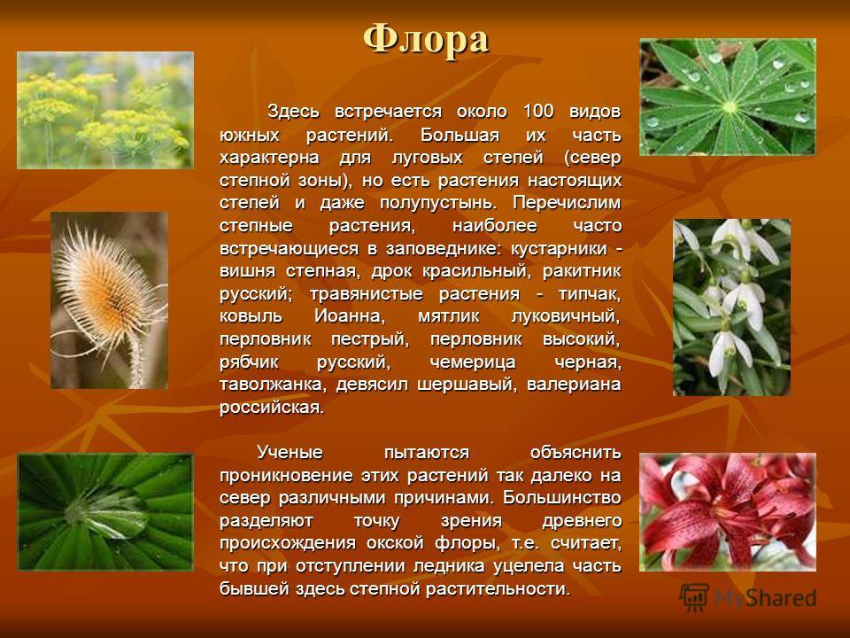 Флора Здесь встречается около 100 видов южных растений. Большая их часть характерна для луговых степей (север степной зоны), но есть растения настоящих степей и даже полупустынь. Перечислим степные растения, наиболее часто встречающиеся в заповеднике