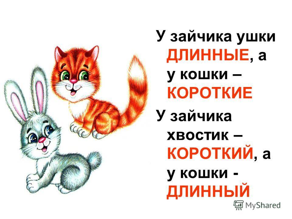 У зайчика ушки ДЛИННЫЕ, а у кошки – КОРОТКИЕ У зайчика хвостик – КОРОТКИЙ, а у кошки - ДЛИННЫЙ