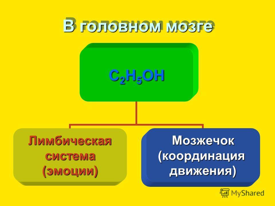 В головном мозге С2Н5ОН Лимбическаясистема(эмоции)Мозжечок(координациядвижения)