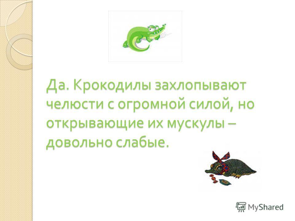 … челюсть двухметрового крокодила можно удерживать с помощью простой резинки ?