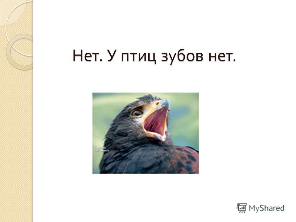 … у некоторых птиц есть зубы ?