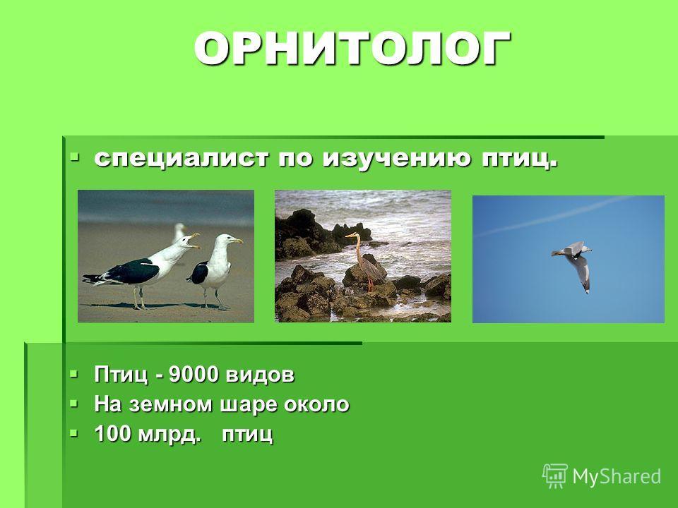 ОРНИТОЛОГ ОРНИТОЛОГ специалист по изучению птиц. специалист по изучению птиц. Птиц - 9000 видов Птиц - 9000 видов На земном шаре около На земном шаре около 100 млрд. птиц 100 млрд. птиц
