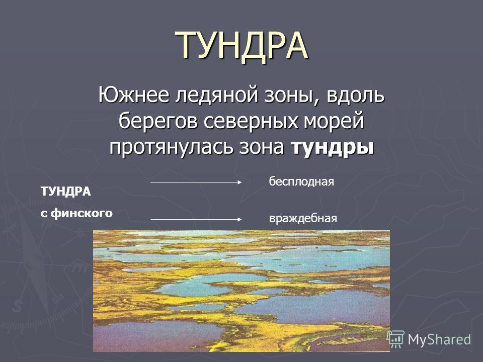 ТУНДРА Южнее ледяной зоны, вдоль берегов северных морей протянулась зона тундры ТУНДРА с финского бесплодная враждебная