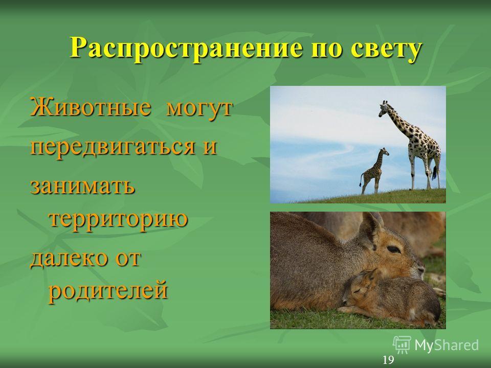 Распространение по свету Животные могут передвигаться и занимать территорию далеко от родителей 19