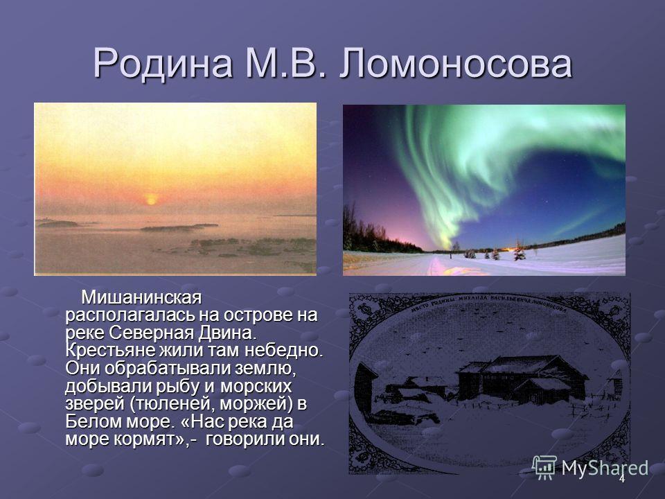 4 Родина М.В. Ломоносова Мишанинская располагалась на острове на реке Северная Двина. Крестьяне жили там небедно. Они обрабатывали землю, добывали рыбу и морских зверей (тюленей, моржей) в Белом море. «Нас река да море кормят»,- говорили они. Мишанин