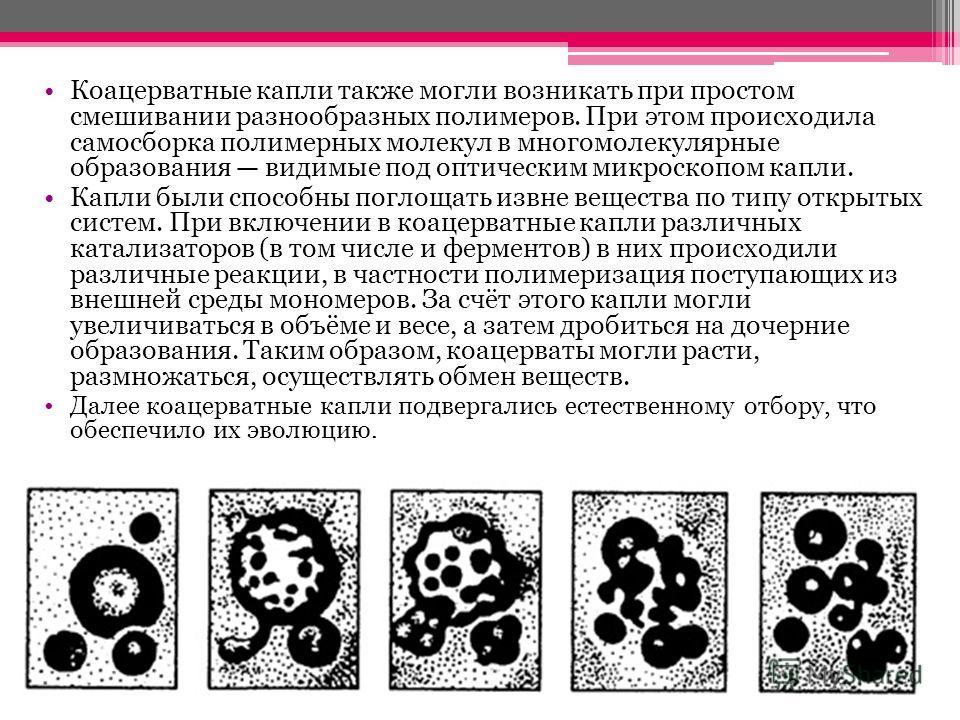 Коацерватные капли также могли возникать при простом смешивании разнообразных полимеров. При этом происходила самосборка полимерных молекул в многомолекулярные образования видимые под оптическим микроскопом капли. Капли были способны поглощать извне