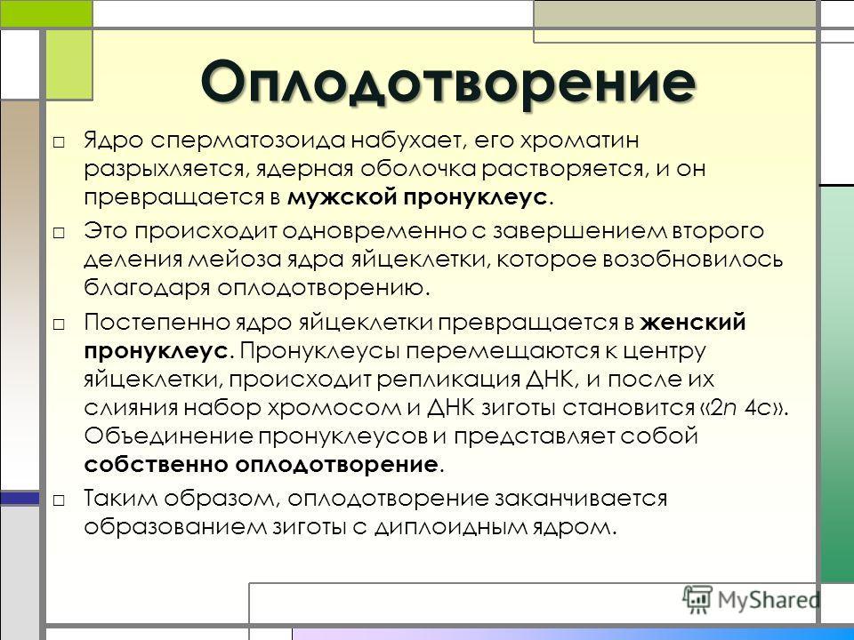 Пронуклеус