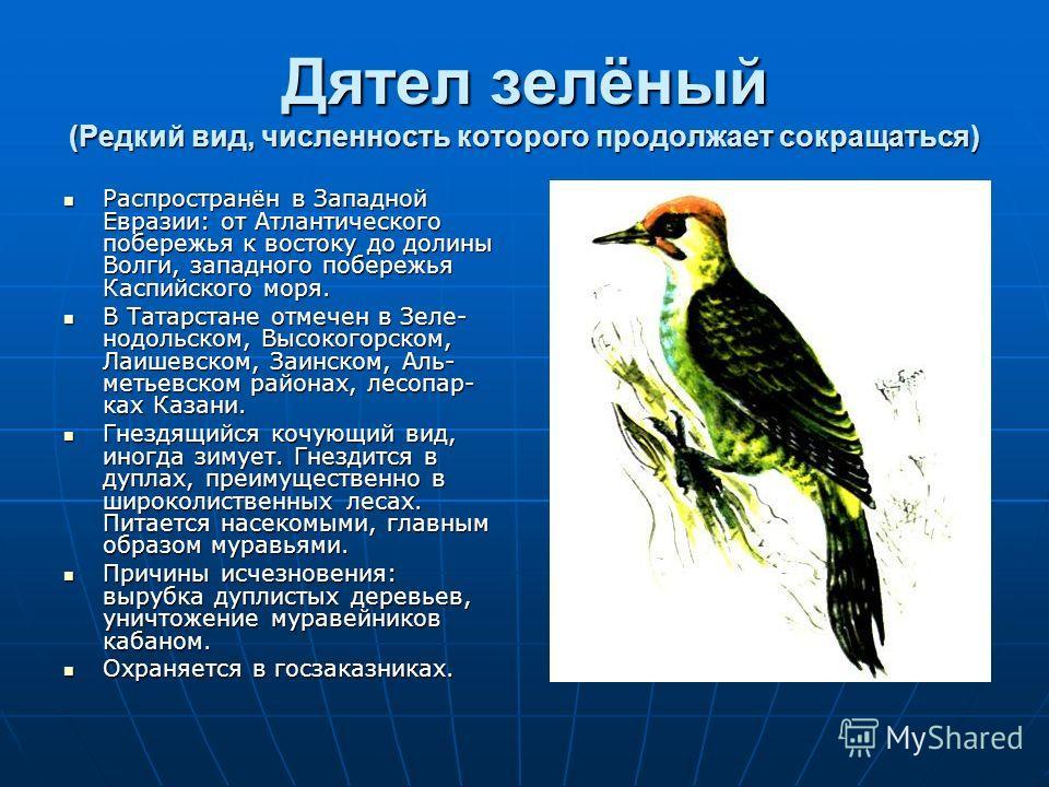 Дятел зелёный (Редкий вид, численность которого продолжает сокращаться) Распространён в Западной Евразии: от Атлантического побережья к востоку до долины Волги, западного побережья Каспийского моря. Распространён в Западной Евразии: от Атлантического