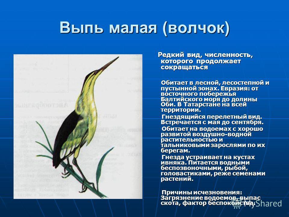 Выпь малая (волчок) Редкий вид, численность, которого продолжает сокращаться Редкий вид, численность, которого продолжает сокращаться Обитает в лесной, лесостепной и пустынной зонах. Евразия: от восточного побережья Балтийского моря до долины Оби. В