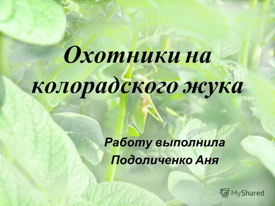 Охотники на колорадского жука Работу выполнила Подоличенко Аня