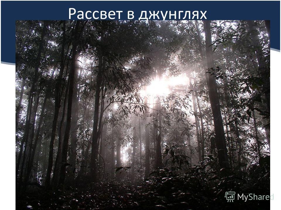 Рассвет в джунглях