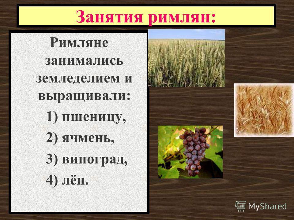 Занятия римлян: Римляне занимались земледелием и выращивали: 1) пшеницу, 2) ячмень, 3) виноград, 4) лён.